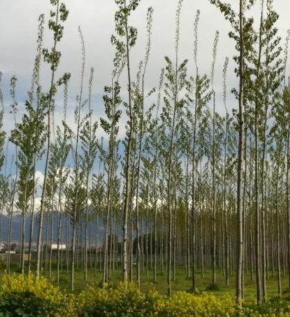 Plantacion Energia Granada